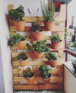 como-fazer-e-cuidar-de-um-jardim-de-apartamento2