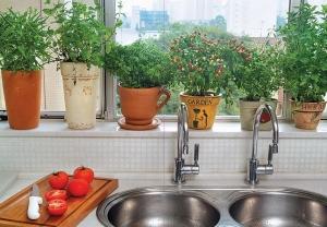 como-fazer-e-cuidar-de-um-jardim-de-apartamento3
