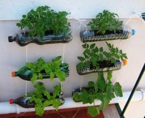 como-fazere-e-cuidar-de-um-jardim-de-apartamento