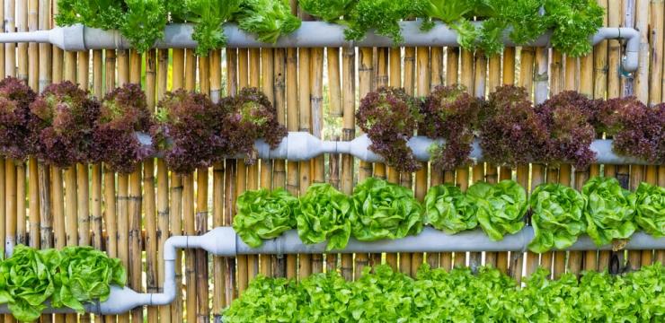 Quer fazer uma horta vertical? Veja 6 passos importantes